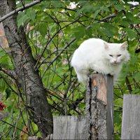 Высоко сижу, далеко гляжу :: Leonid Rutov