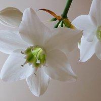 Весна :: Лариса Журавлева