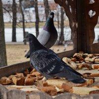 Хлеба хватит, нам бы зрелищ! :: Татьяна Помогалова