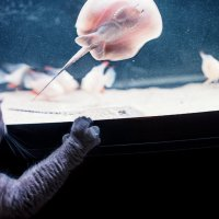 -Думал по моему персональному телеку про рыбалку покажут, а там фильм ужасов..) :: Лилия .