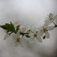 Весна пришла-31. :: Руслан Грицунь