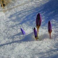 Весна  идет :: Михаил Баевский
