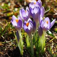 Мартовские цветы :: Swetlana V