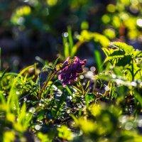 Весны дыхание. :: ALEXANDR L