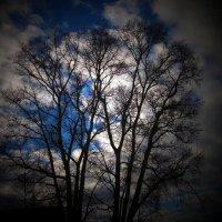 Ветви и небо... :: Павел Зюзин