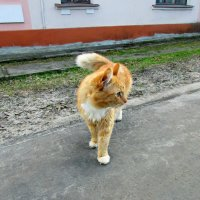 Интересно... в какой стороне кошек больше??? :: Galina ✋ ✋✋