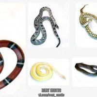 Змеи до 1,5 метров на съемки! :: Роберт Роберт