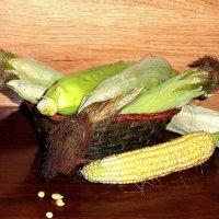 Кукуруза. :: nadyasilyuk Вознюк