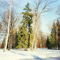 в парке :: Miko Baltiyskiy