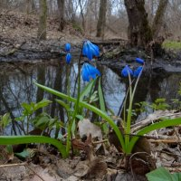 Краски весны v2 :: Роман В.