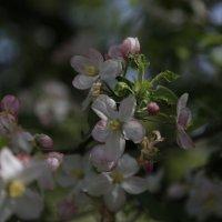 Весна пришла-45. :: Руслан Грицунь