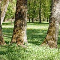 Скоро в парках города :: Николай Н