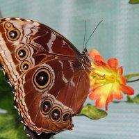 Бабочка и цветок. :: Маргарита ( Марта ) Дрожжина
