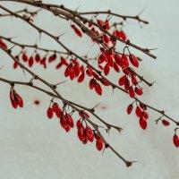 Красное на белом :: Мара Гааг