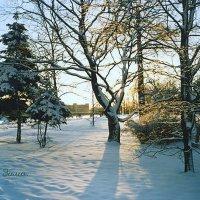 Тени на снегу. :: Miko Baltiyskiy