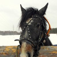 Лошадь я. :: nadyasilyuk Вознюк