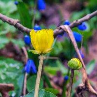 И желтый среди синих :: Юрий Стародубцев