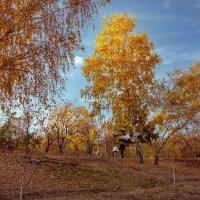 Осень в городском парке. :: Вахтанг Хантадзе