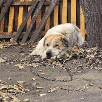 Собака бывает кусачей... :: Людмила Фил