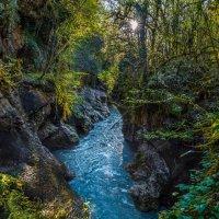 Весенняя река, или субтропический лес весной. :: Фёдор. Лашков