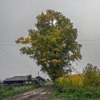 осень в деревне :: gribushko грибушко Николай