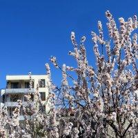 Весны чудесные мгновенья :: Наталья Джикидзе (Берёзина)