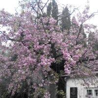 Весна пришла-55. :: Руслан Грицунь