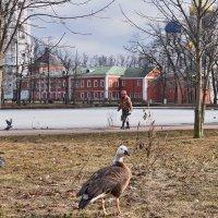 Весна, кто ж ее не любит? :: Татьяна Помогалова