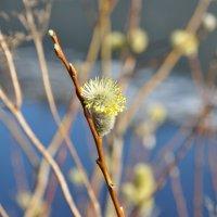 Весна :: Anton Onikienko