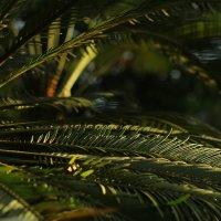 Листья пальмы на закате) :: Татьяна Тимофеева