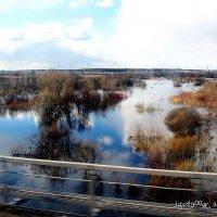 Нынешний  март из  окна  электрички  на  Рязань ... Весна   пошла :: Игорь Пляскин