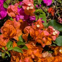 Цветы, Гран Канария :: Witalij Loewin