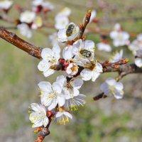 Нектар с цветка :: Виктор Шандыбин