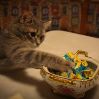 Хочу конфетку! :: Ириника