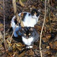 Бездомные котята :: Милешкин Владимир Алексеевич
