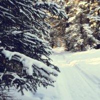Тасеевская зима :: Виктория Большагина