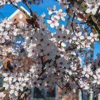 Весна в городе :: Светлана Щербакова