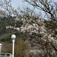 Весна.. :: Ruslan