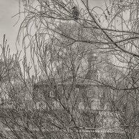 вещая птица... :: Moscow.Salnikov Сальников Сергей Георгиевич