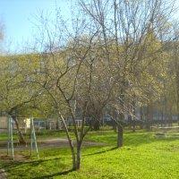 весна в городе :: Александр Попков