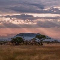 Однажды вечером в саванне...Танзания! :: Александр Вивчарик