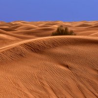 В пустыне Руб аль Хали (Дубаи, ОАЭ) :: Владимир Горубин