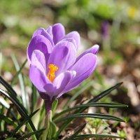 А тем временем, на улице весна! )) :: Райская птица Бородина