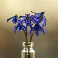 Весеннее цветы. :: Владимир M