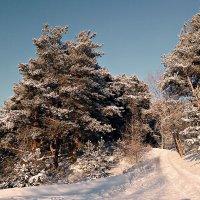 Зима не уступает... :: ВладиМер