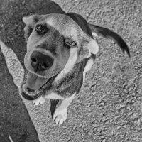 Добродушный пёс... :: марк