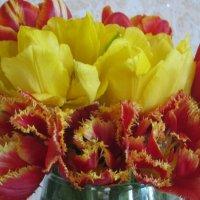 Букет тюльпанов. :: Татьяна