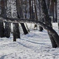 Чужая среди своих. :: Сергей Адигамов