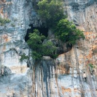 Скала. Пещера.Дерево. :: Наталья Тимофеева