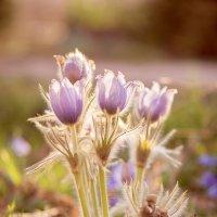 Весна :: Елена Журавлева